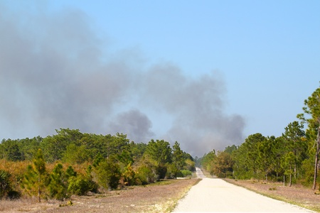 Clouds of smoke rise high from a wildfire in central Florida. Stock Photo - 10428287