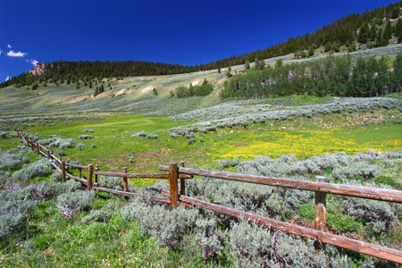 fenceline: Beautiful wildflowers along a rustic fenceline in the Bighorn National Forest of Wyoming