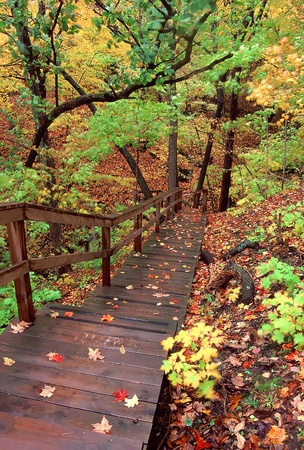 Staircase winds through a myriad of fall colors at Kishaukee Gorge Forest Preserve in northern Illinois photo
