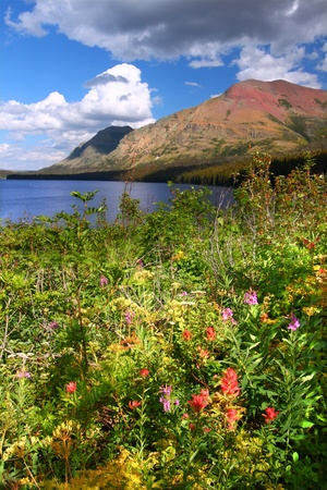 Wildflowers along the shoreline of Two Medicine Lake in Glacier National Park - Montana