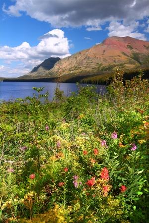 Wildflowers entlang der Küste von Two Medicine Lake in Glacier National Park - Montana Standard-Bild - 10510462