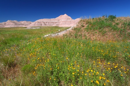 Wildflowers sway in the wind at the Conata Basin of Badlands National Park - South Dakota. photo