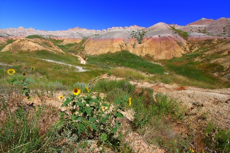 Wildflowers grow against a backdrop of colorful mountains in the Badlands National Park of South Dakota photo