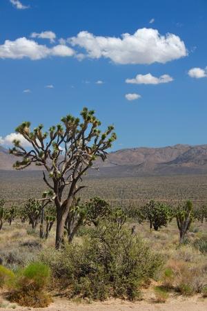 bernardino: Arid expanse of the Mojave National Preserve in California