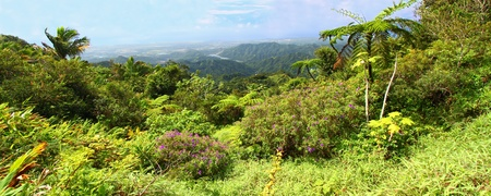 Beautiful view of the lush tropical forests of Puerto Rico Stock Photo
