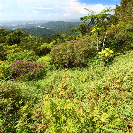 Beautiful view of the lush tropical forests of Puerto Rico photo