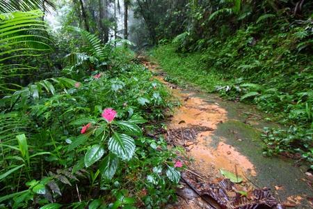 パスを通じて、霧トロ黒人の熱帯雨林のプエルトリコ 写真素材 - 10933147