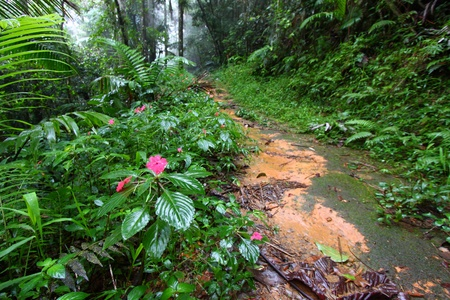 Path through the foggy Toro Negro Rainforest of Puerto Rico