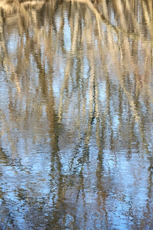 reflect: Trees reflect off the surface of the Kishwaukee River in northern Illinois