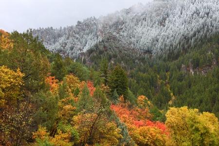 降雪毛布キャッシュ ユタ国有林でカラフルな秋の風景