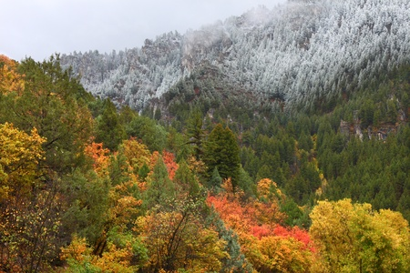 Snowfall blankets colorful autumn scenery at Cache National Forest of Utah photo