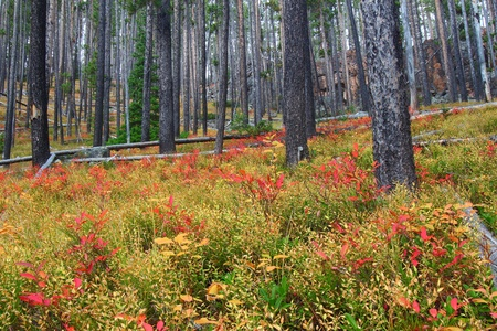 Bright autumn colors in the Lewis and Clark National Forest of central Montana Stock Photo - 11568212
