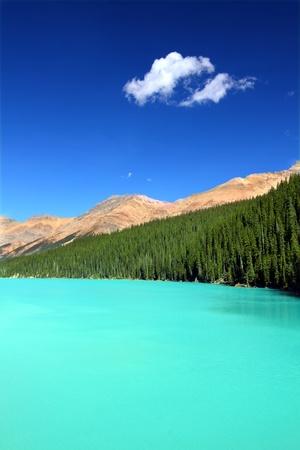 Bright waters of Peyto Lake at Banff National Park in Canada photo