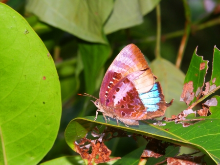 Bright Butterfly in the tropical rainforest of Barron Gorge National Park - Australia Stock Photo - 11869218