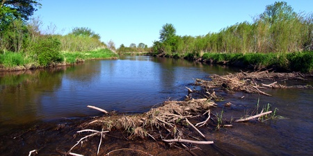 Beaver dam in construction on the Piscasaw Creek of northern Illinois photo