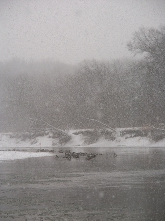 Geese sit along the Kishwaukee River during a winter snowstorm photo
