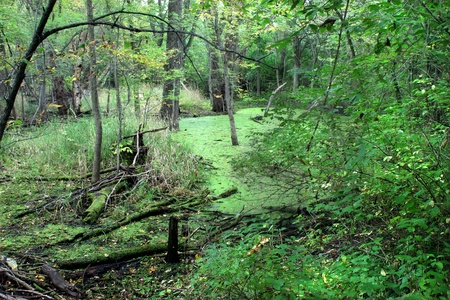 Dense forest surrounds a wetland in the midwestern United States photo