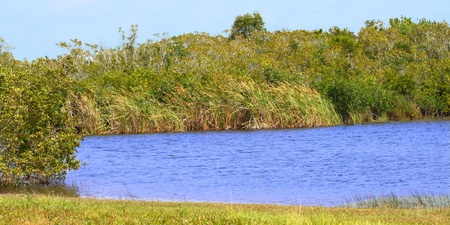Beautiful scenery at Everglades National Park of Florida, USA Stock Photo - 13091554