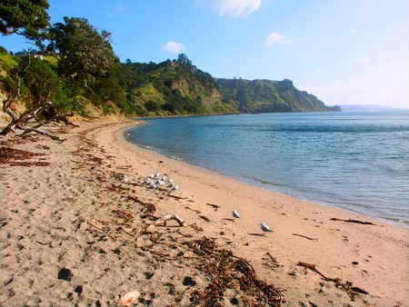 Beautiful day along a beach at Goat Island Marine Reserve of New Zealand