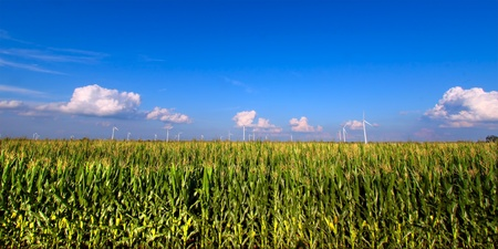 View of an Illinois cornfield on a beautiful sunny day photo