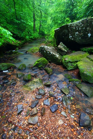 cane creek: Tranquil stream cuts a deep gorge through the lush forests of northern Alabama