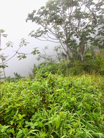 Foggy skies cover a lush mountainside forest of Puerto Rico photo