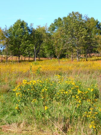 Prairie scene of wildflowers at Castle Rock State Park of Illinois Stock Photo - 13678306