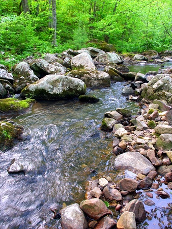 Stream flows through a dense woodland at Baxters Hollow State Natural Area in southern Wisconsin photo