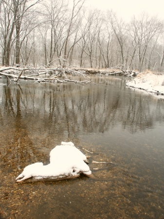 harsh: Dead deer in the Kishwaukee River demonstrates the harsh reality of a cold winter