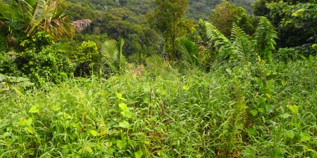 Tropical vegetation grows in the El Yunque Rainforest of Puerto Rico photo