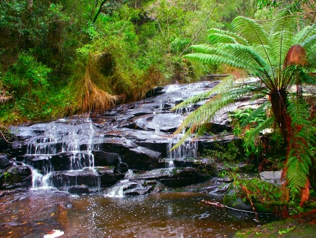 Rainforest cascade in the Great Otway National Park of southern Victoria, Australia Stock Photo - 13954036