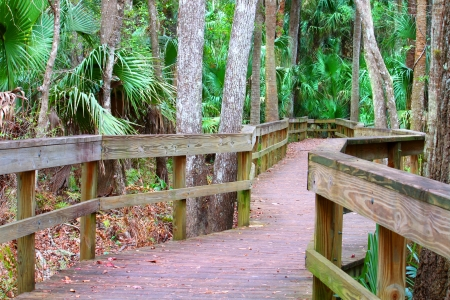 swampy: Boardwalk through the swampy landscape of Highlands Hammock State Park in Florida