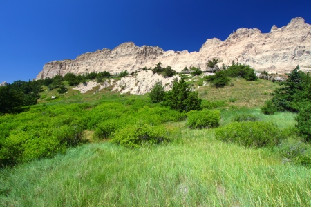 Oasis of dense vegetation by Cliff Shelf in Badlands National Park of South Dakota photo
