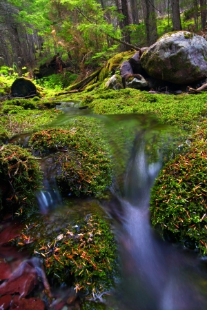 Small stream flows through a lush moss covered forest of Glacier National Park photo