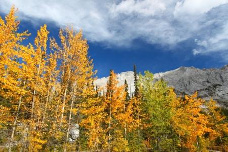 canadian rockies: Autumn colors below blue skies in the Canadian Rockies