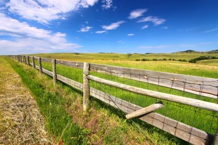 fenceline: Wooden fenceline in the prairies of Custer State Park - South Dakota