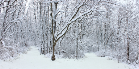 Hiking trail though a winter wonderland in northern Illinois Stock Photo - 15873427