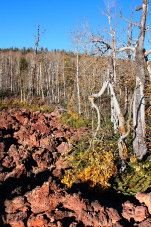 ut: Dixie National Forest of Utah