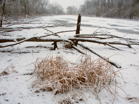 wetland conservation: Snowfall over a frozen wetland at Lib Conservation Area in Illinois