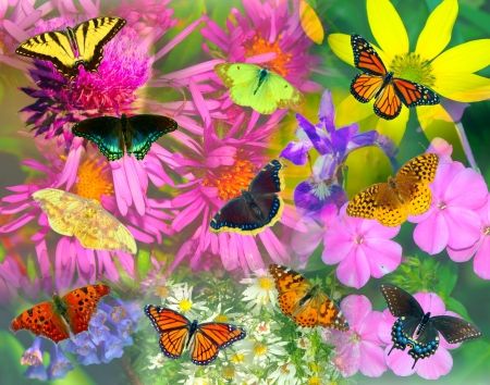 Collage of North American butterflies and flowers. photo