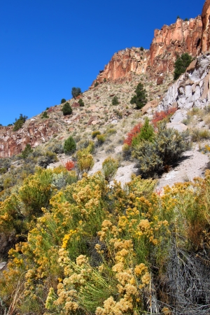 steep cliffs: Wildflowers grow beneath steep cliffs at Fremont Indian State Park of Utah