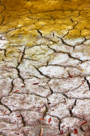 Cracked earth patterns in the ground of the Florida Everglades Фото со стока