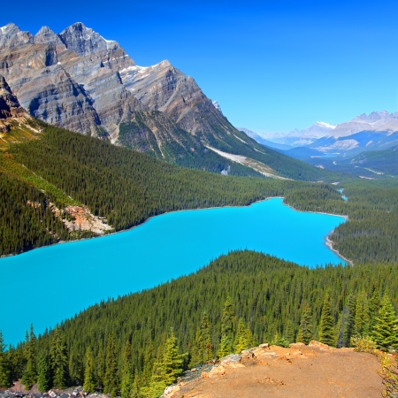 magnificent: Magnificent blue waters of Peyto Lake of Banff National Park in Canada