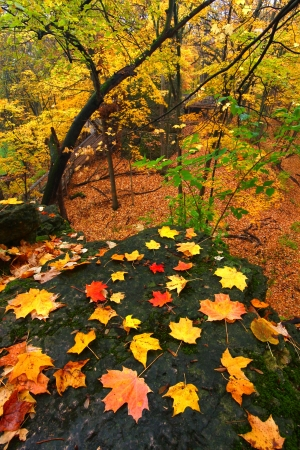 Beautiful autumn landscape at Rock Cut State Park in northern Illinois Stock Photo - 16697365