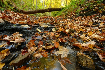 trickling: Autumn scenery surrounds a trickling creek in northern Illinois