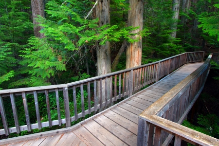 cedars: Trail of the Cedars in Glacier National Park - Montana