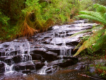 Rainforest cascade in the Great Otway National Park of southern Victoria, Australia photo