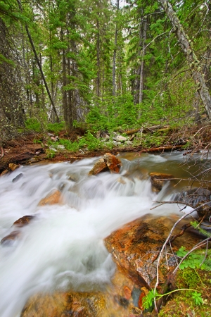 Rapids of Bucking Mule Creek in the Bighorn National Forest of Wyoming photo