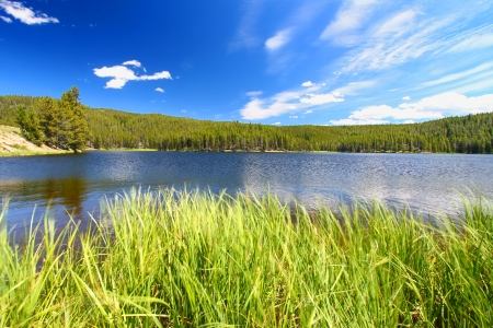 hydrology: Grass grows along Sibley Lake in the Bighorn National Forest of Wyoming Stock Photo