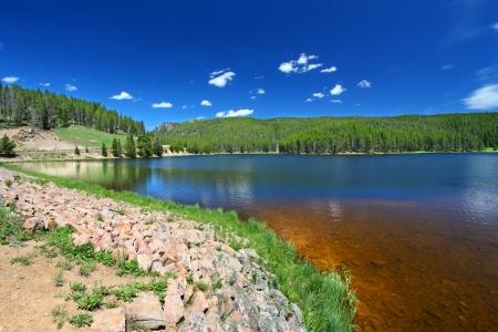 national forest: La hierba crece a lo largo de Sibley Lake en el Bosque Nacional Bighorn de Wyoming